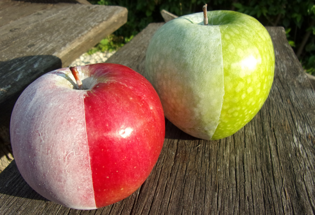 DeccoShielddel képzett bevonat almán