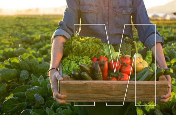 Zöldségtermesztési Szakmai Est
